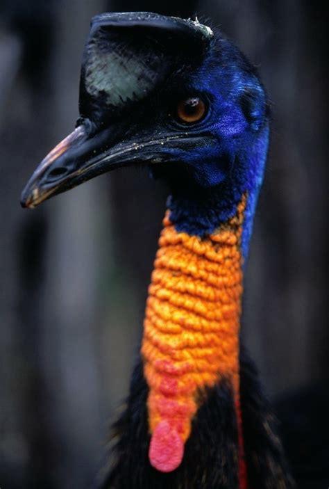 Birds 8 Dusky S Wonders Blue Bird On Neck