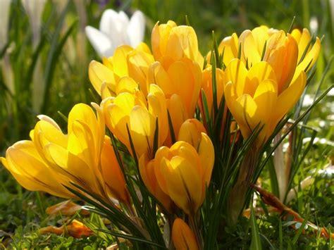 plant autumn flowering bulbs now news david s nurseries worcester