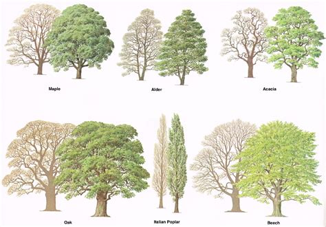 type of trees types of trees medway valley line