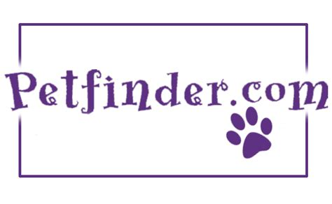 petfinders dogs meet the animals animal league