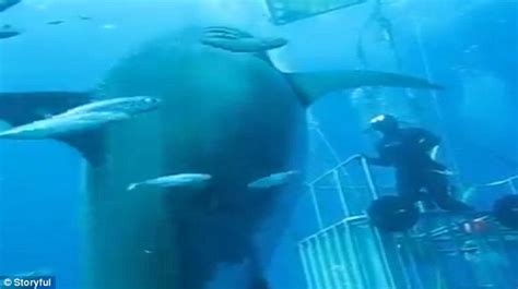 film blue mexico biggest great white shark ever caught on camera