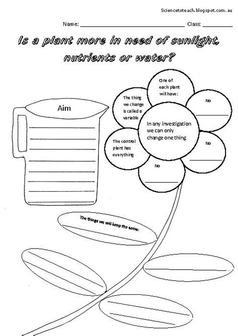 18 best images of grade science plant worksheet