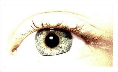 el cuerpo eyes fotos gratis ver macro cerca boca pesta 241 a alumno