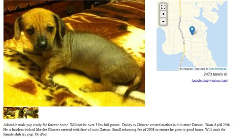 craigslist free dogs craigslist dogs 2 more dogs for trade puppy leaks