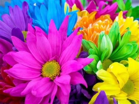 bright flowers flowers wallpapers