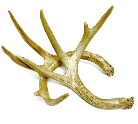 Antler Home Decor faux deer antlers cabin or rustic table decor photography
