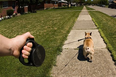 out on a leash how terryã s gave me new books a vet s opinion on retractable leashes
