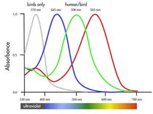 are birds color blind your field guide is wrong a bird s eye view of the world