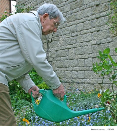 retired man watering  garden stock picture