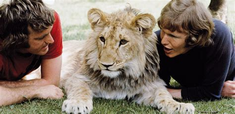 film about lion from harrods a lion called christian official website ace bourkea