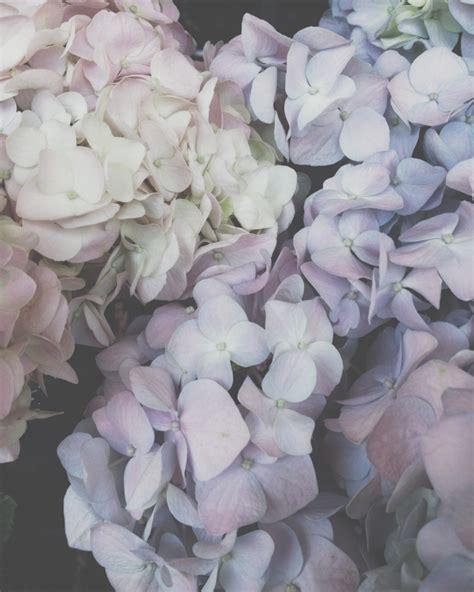 Wie Pflege Ich Amaryllis 4891 by Die Sch 246 Nheit Der Bl 252 Ten Toll Was Blumen Machen
