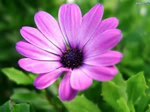 light purple flowers flower photos light purple flower