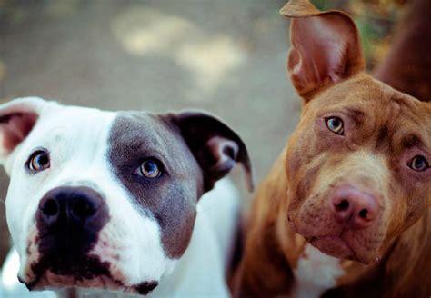 Ley De Razas De Perros Peligrosos Boo The Dogs | ley de razas de perros peligrosos boo the dogs perros
