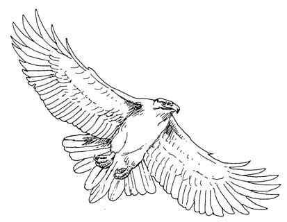 Black Hawk Outline by Hawk Black And White Clipart Clipart Suggest