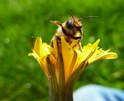 bees prepper website