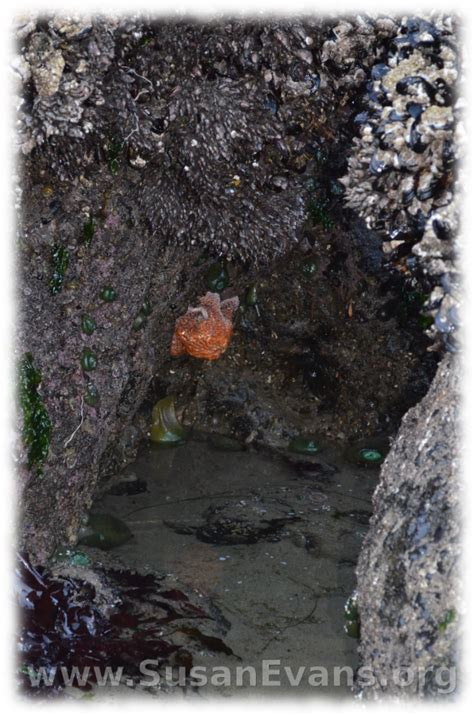 tide pools of cannon beach susan s homeschool blog susan