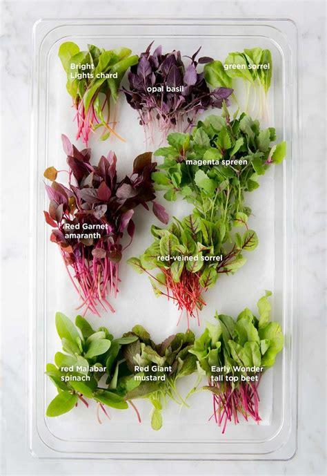 microgreens images  pinterest gardening