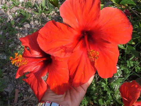 immagini di fiori per desktop fiori immagini gratis foto desktop scaricare