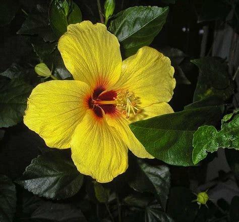 Tahan Panas Corak Dan Warna Random macam macam tanaman hias dan gambarnya belajar berkebun