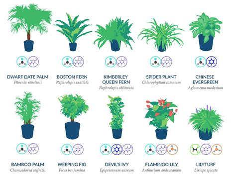 best houseplants for clean air nasa reveals a list of the best air cleaning plants for
