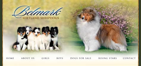 miniature sheltie puppies for sale sheltie information and sheltie pictures grooming supplies for breeds picture