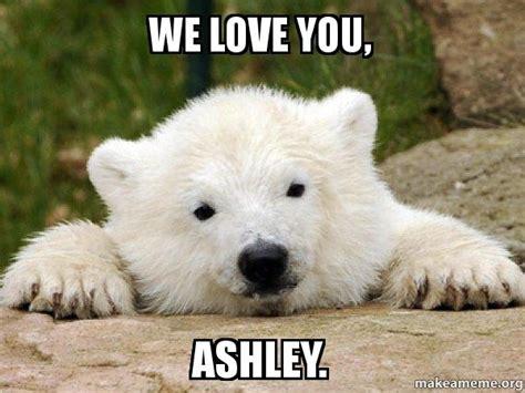 We Love Meme - popular opinion bear meme