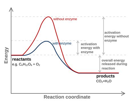 tutorial questions on rate of reaction electrochemistry can you derive reaction rates from the