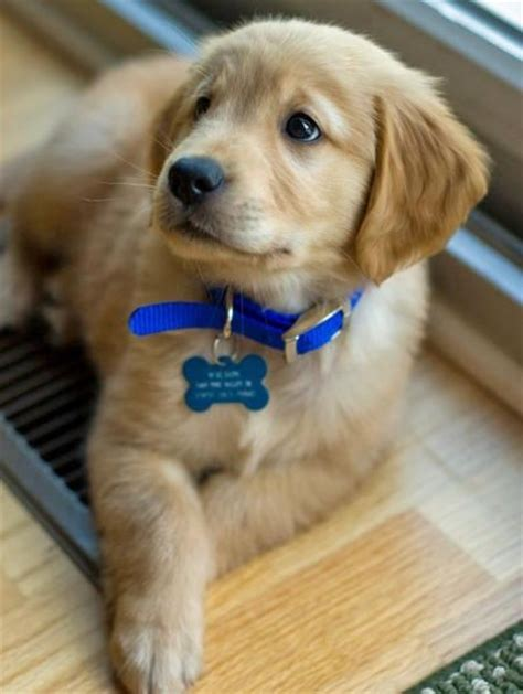 golden retriever indian names 17 best images about the curious incident of the in the time on