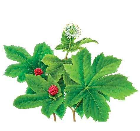 Herbal Sn Goldenseal Herbal Supplement Herbal Teas