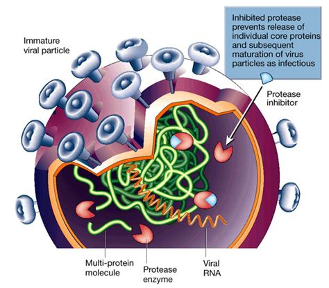 Dpp 4 Inhibitors Also Search For Protease Inhibitors Endopeptidase Inhibitors Peptidase Inhibitors Peptide Hydrolase