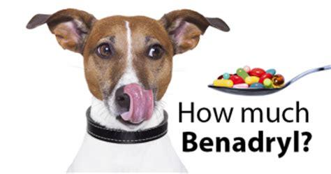 how much liquid benadryl for a benadryl dosage for dogs benadryl dosage for dogs dosage chart