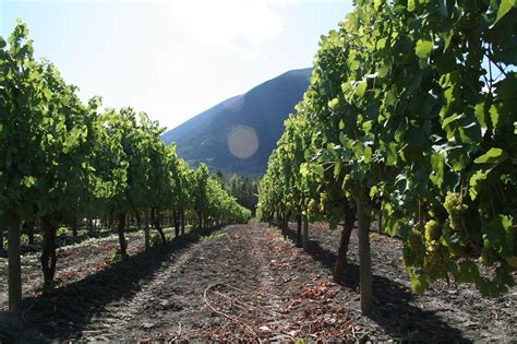 recline ridge winery shuswap wineries