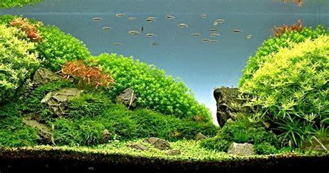 membuat kipas aquascape nine gold membuat sendiri akuarium aquascaping