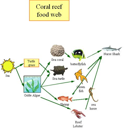 food websites coral reefs publish with glogster