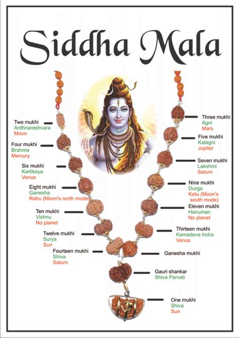 rudraksha meaning and mukhi types siddha mala the most powerful 1 14 mukhis including gauri