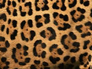 Jaguar Prints Erica Bunker Diy Style The Of Cultivating A Stylish