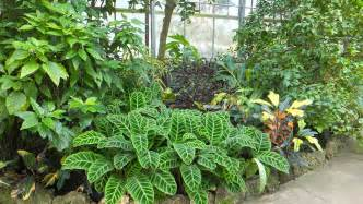 file plants conservatory jpg wikimedia commons