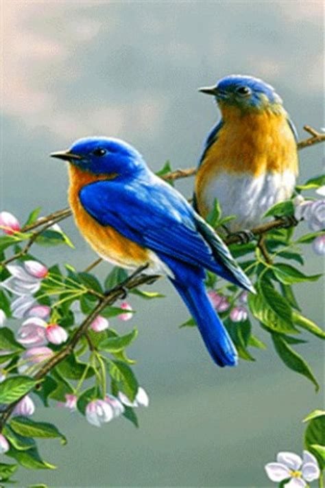 download blue birds live wallpaper for android by max