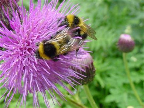 scoperchiare il vaso di pandora basta pesticidi sono morte tutte le api il di