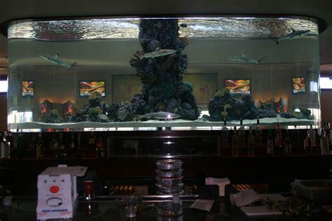 aquarium design group llc gofish aquariums llc chicago s source for custom built
