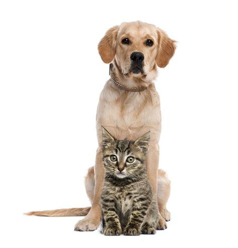 golden retriever friendly cat friendly breeds animal friends