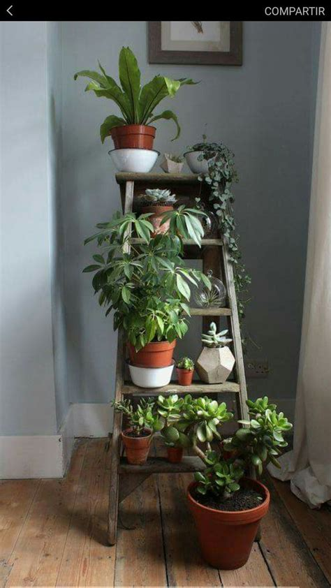 indoor plants ideas 25 best ideas about house plants on pinterest plant