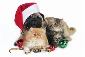 Go back gt gallery for gt christmas puppies and kittens