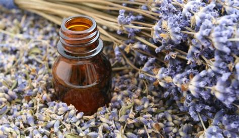 Parfume Tress Relax top 10 essential oils for relaxation and stress relief
