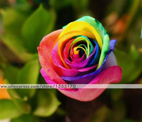 imagenes de flores multicolores acquista all ingrosso online rose multicolore da grossisti