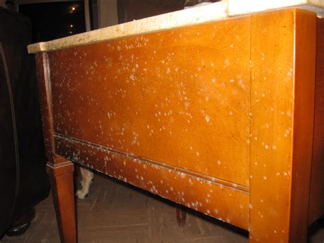 how to clean mold from upholstery mold caused a stir in florida s river strand community