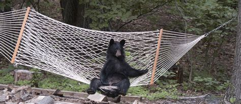 3 ways to stay safe from animals when you hammock