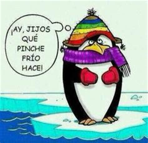 imagenes que digan hace mucho frio 1000 images about humor p on pinterest chistes humor