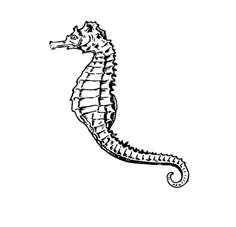 free printable seahorse coloring pages for kids