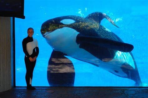 filme stream seiten m tilikum der killerwal wal delfin und hai wiki fandom